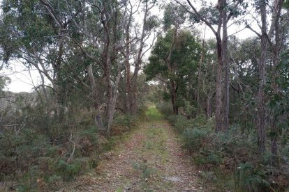Calectasia Conservation Park-03