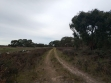 Calectasia Conservation Park-05