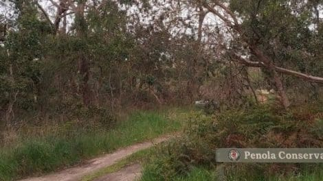 Penola Conservation Park-featured