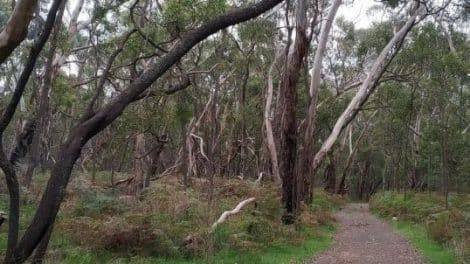 Telford Scrub Conservation Park-featured