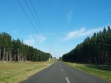 Mount Gambier Forest Reserve-01