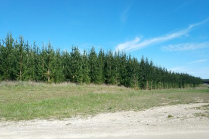 Mount Gambier Forest Reserve-03