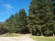 Mount Gambier Forest Reserve-05
