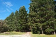 Mount Gambier Forest Reserve