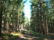 Mount Gambier Forest Reserve-06