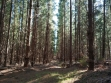 Mount Gambier Forest Reserve-07
