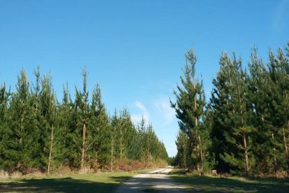 Mount Gambier Forest Reserve-08
