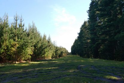 Mount Gambier Forest Reserve-09