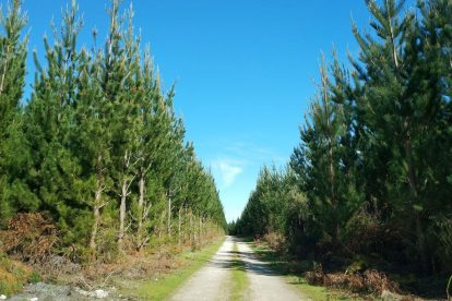 Mount Gambier Forest Reserve-10