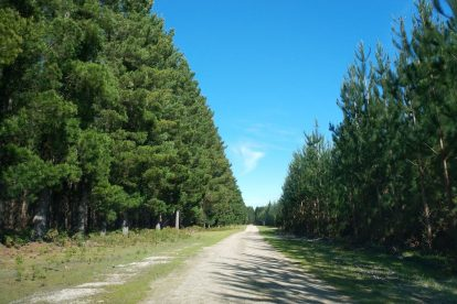 Mount Gambier Forest Reserve-11