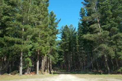 Mount Gambier Forest Reserve-12