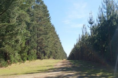 Mount Gambier Forest Reserve-13