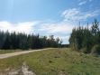 Mount Gambier Forest Reserve-15