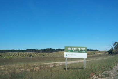 Noolook Forest Reserve-01