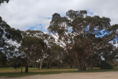 Naracoorte Golf Club-08