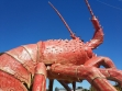 The Big Lobster-08