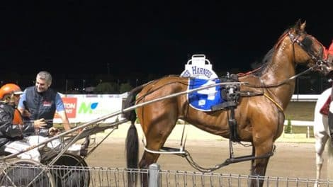 Mount Gambier Pacing Gold Cup